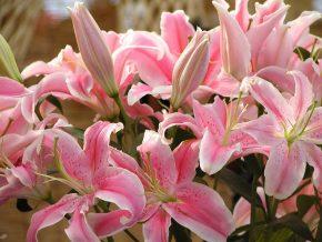 5 лилии