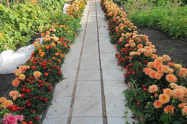 цветочный бордюр на даче