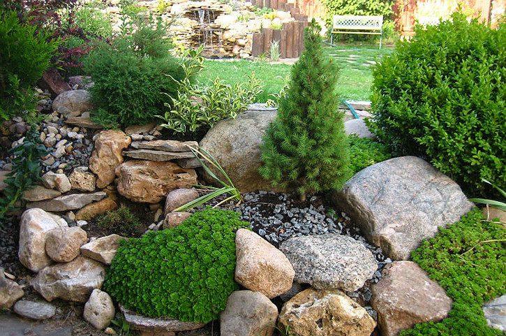 растения для альпинария - туи